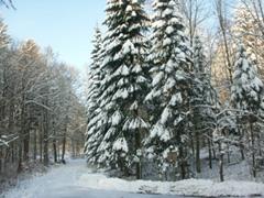 Winterwald in Pyrmont