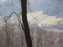 Pyrmonter Forst im Winter