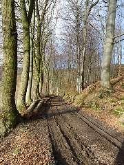 Pyrmonter Waldwege